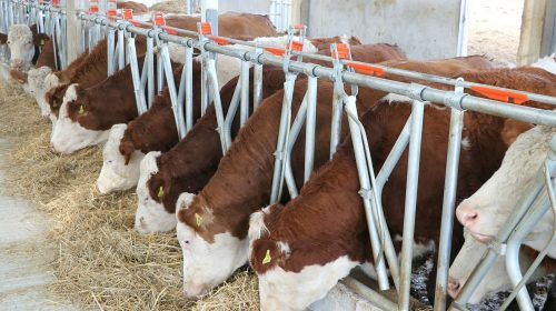 Tarım ve Hayvancılık Desteği